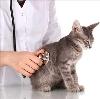 Ветеринарные клиники в Шарыпово